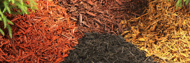 Mulching and Winter Protection: Essential Steps to Guard your Garden